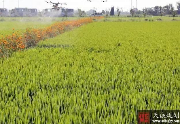 胶州新增耕地304亩 节省耕地指标资金1.5亿余元