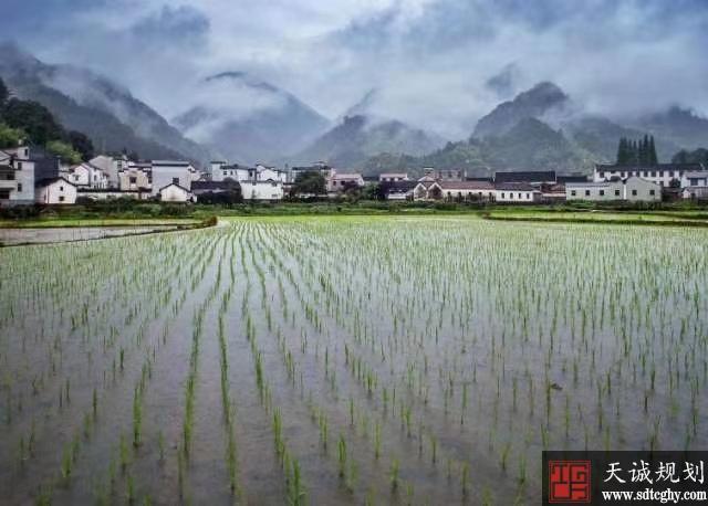 """婺城首张农业""""标准地""""履约保险保单生效给农民定心"""