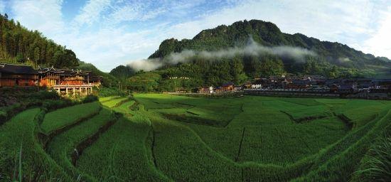 洞口县农土地流转促规模经营提高集体经济收入水平