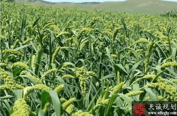 张家界增减挂钩助推脱贫攻坚 新增农用地3万亩实现收益19.8亿