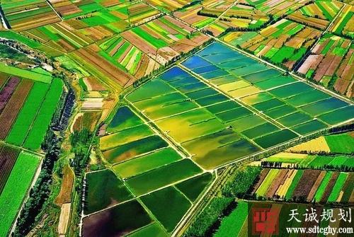 国办发布《通知》严禁违规占用耕地绿化造林等非农建设