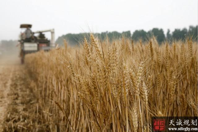 """""""十四五""""期末各地超50%土地出让收益将用于农业农村"""