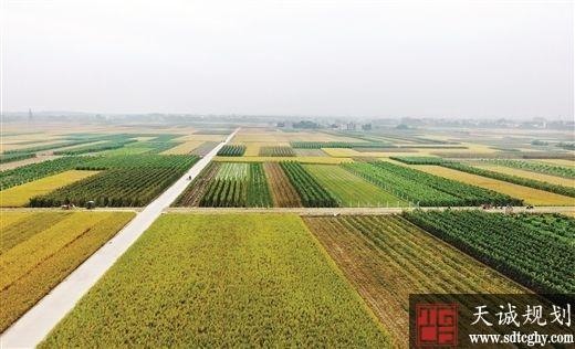广西狠抓耕地保护和地力培肥提升耕地质量