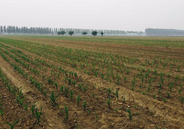 对耕地特别是永久基本农田实行特殊保护 牢牢守住18亿亩耕地红线