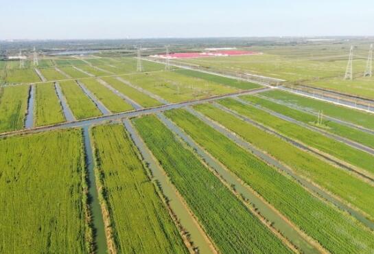 """滨州沾化区加大土地整治力度 深入推进""""四个一万亩""""工作"""