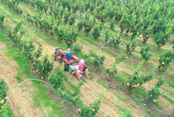阳谷县农土地流转让实现群众与集体双增收